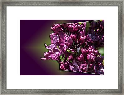 Thinking About Lilacs Out Of The Box Framed Print by Mick Anderson