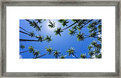 Thirsty Palms Framed Print by Sean Davey