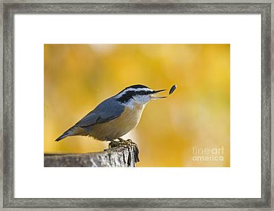 This Sunflower Seed Is Not Good Enough  Framed Print by Tim Grams