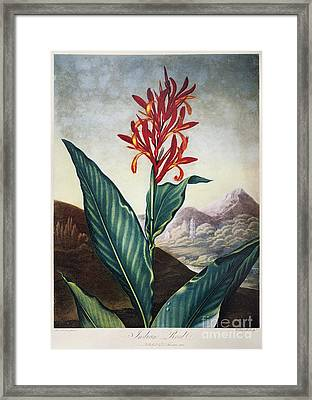 Thornton: Indian Reed Framed Print by Granger