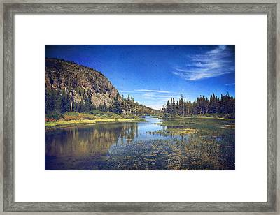 Those Summer Days Framed Print by Laurie Search
