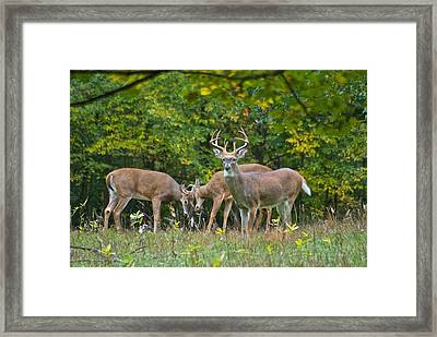 Three Bucks_0054_4463 Framed Print by Michael Peychich