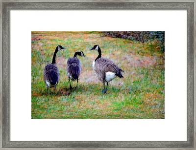 Three Canadian Geese Framed Print by Lanjee Chee