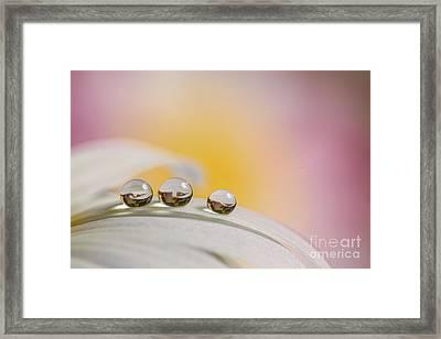 Three Drops Framed Print by Veikko Suikkanen