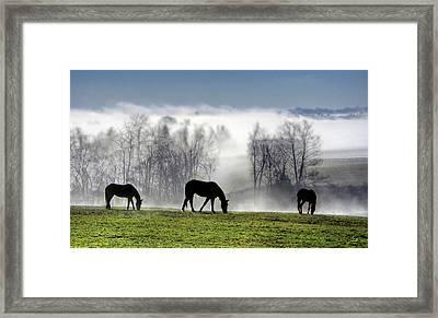 Three Horse Morning Framed Print by Sam Davis Johnson