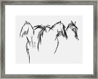 Three Horse Sketch Framed Print by Frances Marino