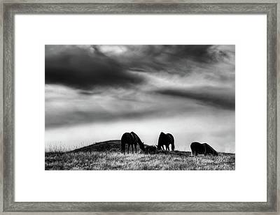 Three Horses On The Hill Framed Print by David Patterson