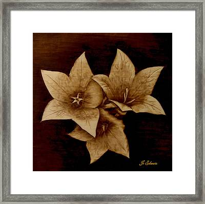 Three Framed Print by Jo Schwartz