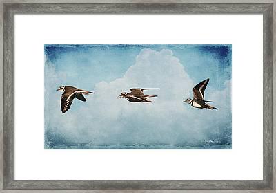 Three Killdeer Framed Print by Karen Slagle