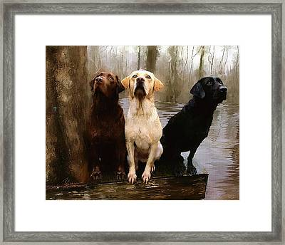 Three Labs Framed Print by Robert Smith