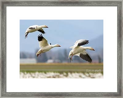 Three Landing Framed Print by Mike Dawson