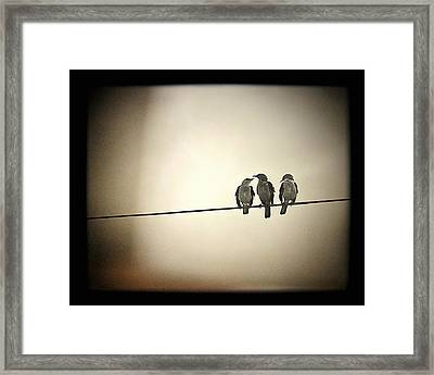 Three Little Birds Framed Print by Trish Mistric