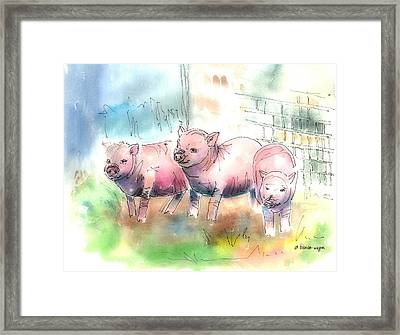 Three Little Pigs Framed Print by Arline Wagner