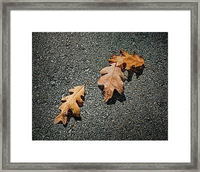 Three Oak Leaves Framed Print by Scott Norris