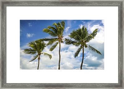 Three Palms Framed Print by Karen Wiles
