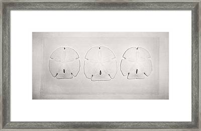 Three Sand Dollars Framed Print by Scott Norris