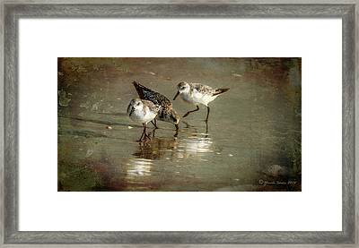Three Together Framed Print by Marvin Spates