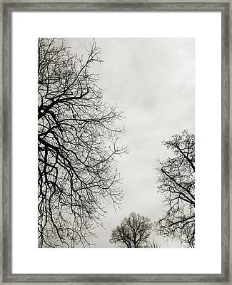 Three Trees Framed Print by Linda Woods