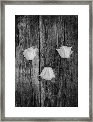 Three White Roses Framed Print by Kim Hojnacki