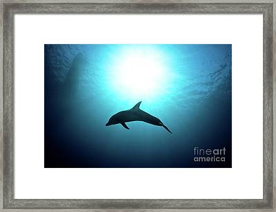 three year old Dolphin  Framed Print by Hagai Nativ