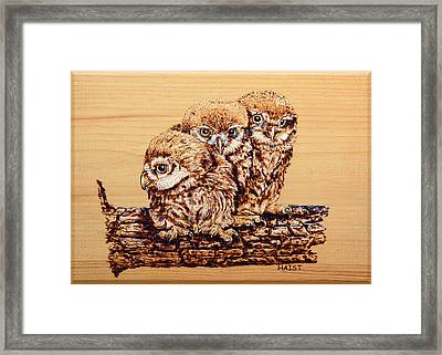 Three's Company Framed Print by Ron Haist