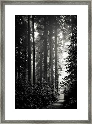 Through The Redwoods - Black And White Framed Print by Eduard Moldoveanu