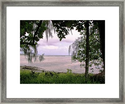 Through The Trees Framed Print by Kate Farrant