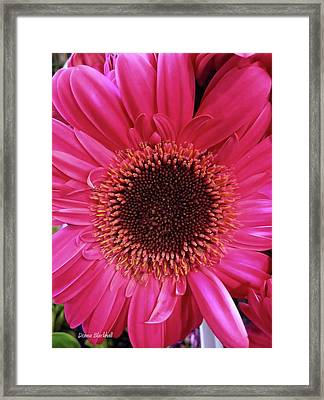 Tickled Pink Framed Print by Donna Blackhall