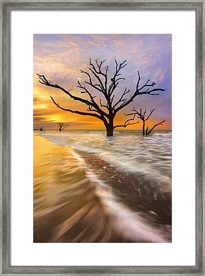 Tidal Trees - Craigbill.com - Open Edition Framed Print by Craig Bill