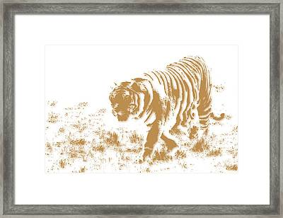 Tiger 2 Framed Print by Joe Hamilton