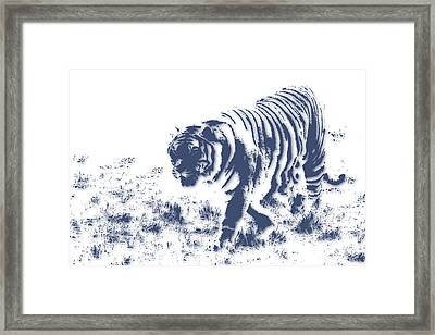 Tiger 3 Framed Print by Joe Hamilton