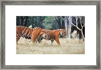 Tiger Crossing Framed Print by Judy Kay