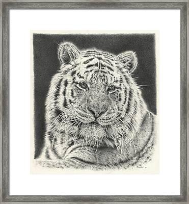 Tiger Drawing Framed Print by Remrov