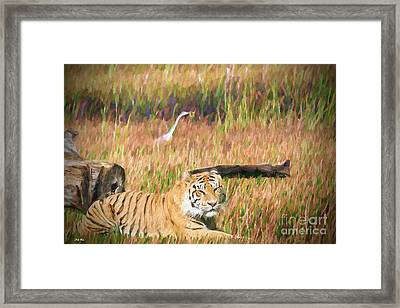 Tiger In The Grassland Framed Print by Judy Kay