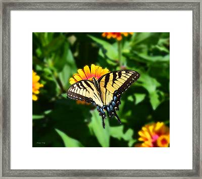 Tiger Swallowtail Butterfly Framed Print by Kathy Kelly