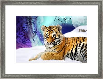 Tiger Treasures Framed Print by Julie L Hoddinott