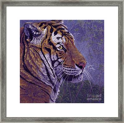 Tiger's Thoughts Framed Print by Svetlana Ledneva-Schukina