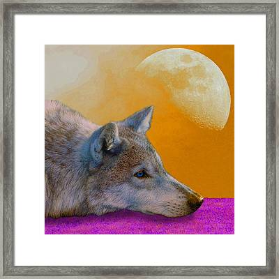 Timber Wolf Under The Moon Framed Print by Tina B Hamilton