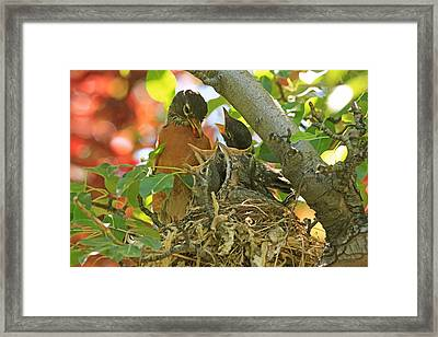 Time For Your Fruits Framed Print by Donna Kennedy