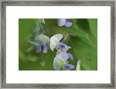 Timeless Framed Print by Connie Handscomb