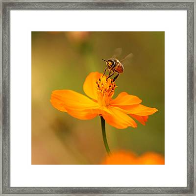 Tiny Dancer Framed Print by Marion Cullen