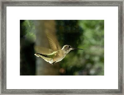 Tiny Dancer Framed Print by Nancy Comley