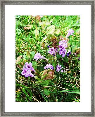 Tiny Flowers II Framed Print by Anna Villarreal Garbis