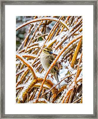 Tiny Survivor Framed Print by Steve Harrington