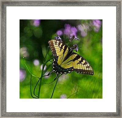 Tiny Wings Framed Print by Robert Pearson