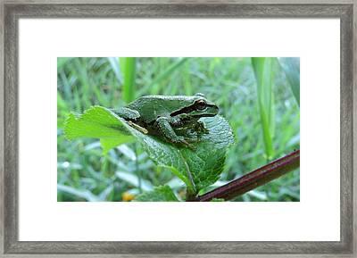 Tiny Wonder Framed Print by I'ina Van Lawick