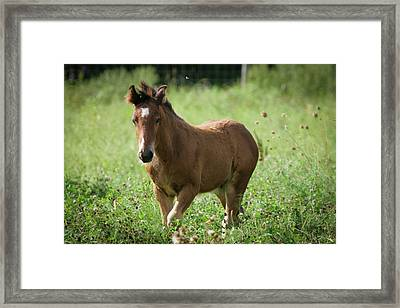 Tiptoe Through The Clover With Me Framed Print by Laurie Comfort