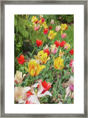 Tiptoe Through The Tulips  Framed Print by A New Focus Photography