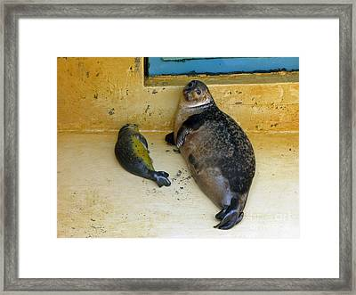 Tired Of Tourists. No Flash Photography Please.  Framed Print by Ausra Paulauskaite
