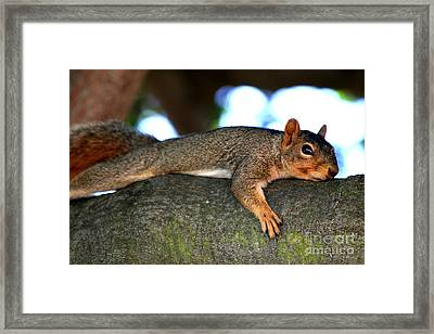 Tired Old Squirrel . R6622 Framed Print by Wingsdomain Art and Photography